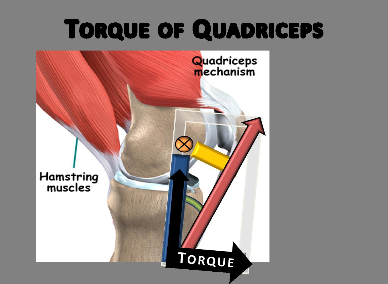 Torque Of The Quadriceps Muscular System Pinterest Muscular