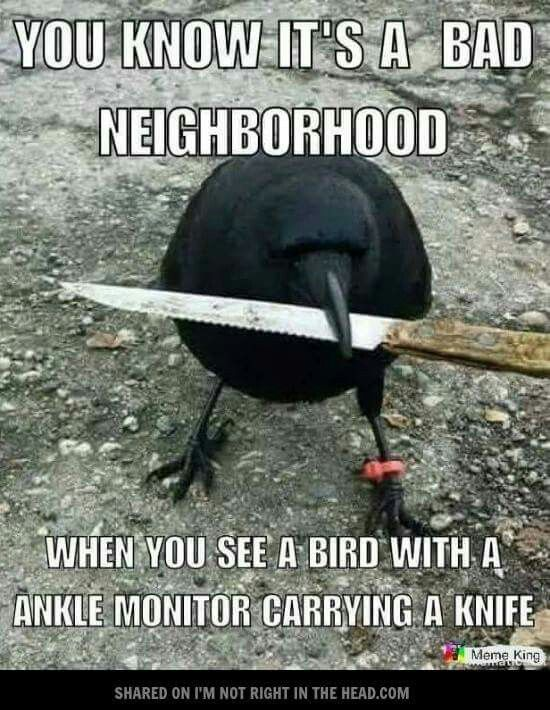 Actually Crows Have Been Known To Grab Tools And Blades And More Stuff And Kill Humans With Them Funny Cute Funny Animals Haha Funny No npc memes, or memes about how libtards or magats are so wrong. funny cute funny animals