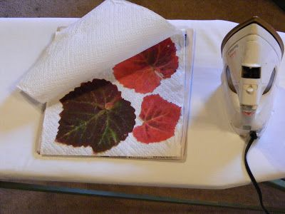 Debbi thinks deep: How to Preserve Autumn Leaves