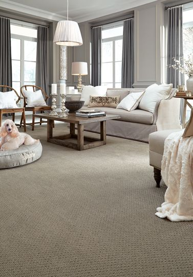 Shadow Z6947 00320 Carpet Flooring Anderson Tuftex Living
