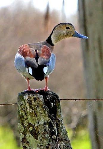 просто животные – Сообщество – Google+ | птицы | Животные ...