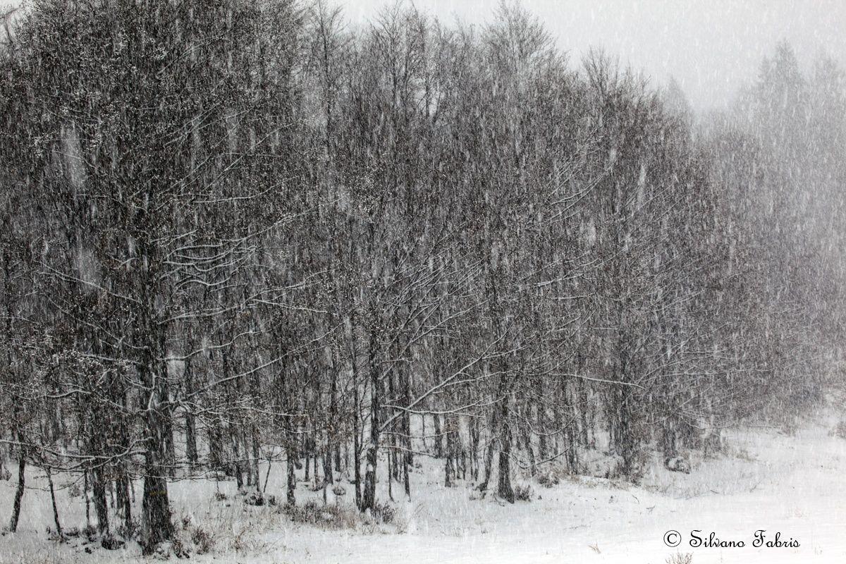 ..scende la neve.. by Silvano Fabris on 500px.