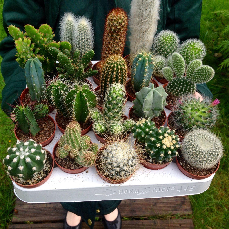 что именно кактусы домашние виды фото с названиями для русских