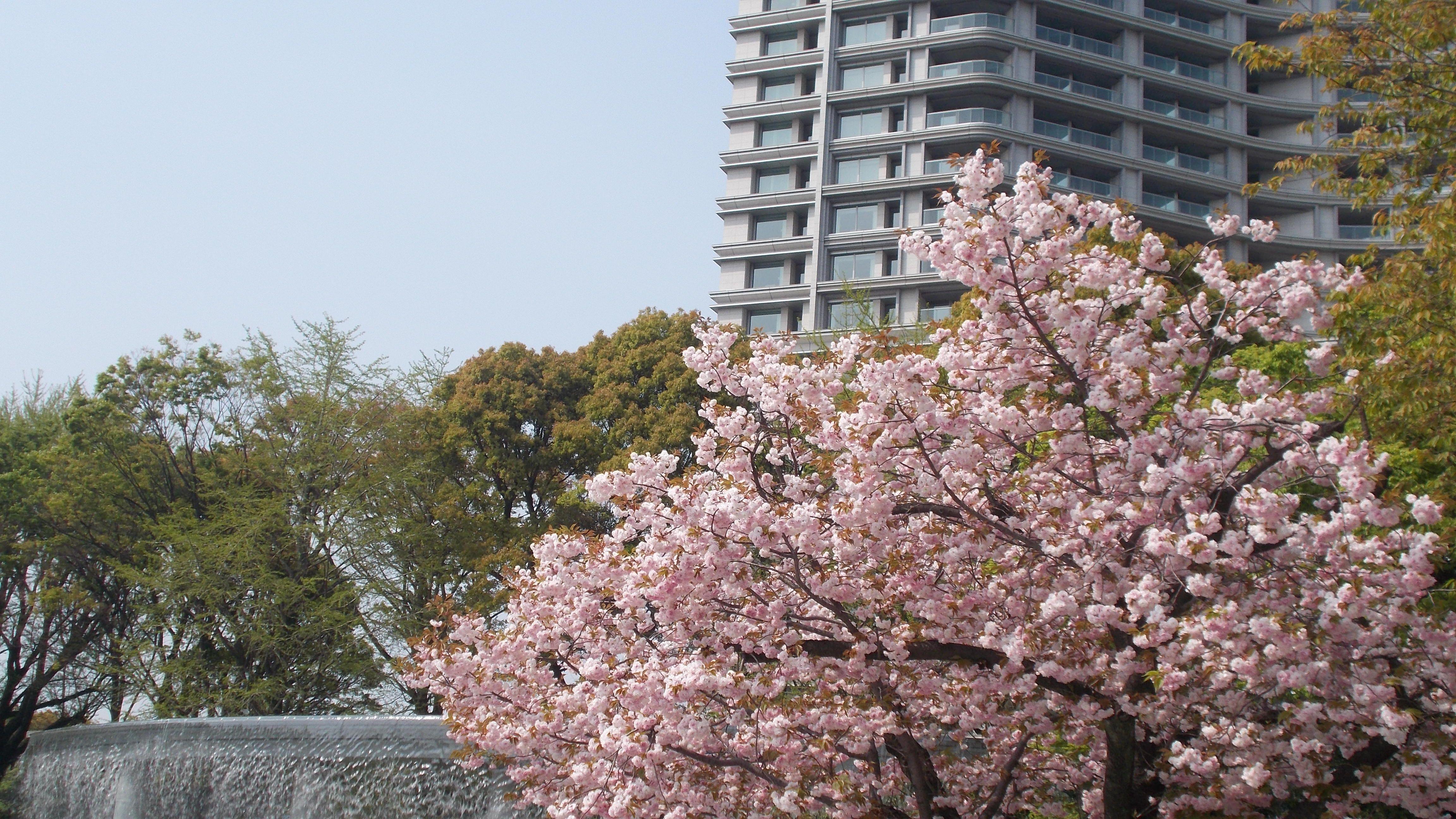 Il Giappone a casa nostra – Giapponesi nell anima