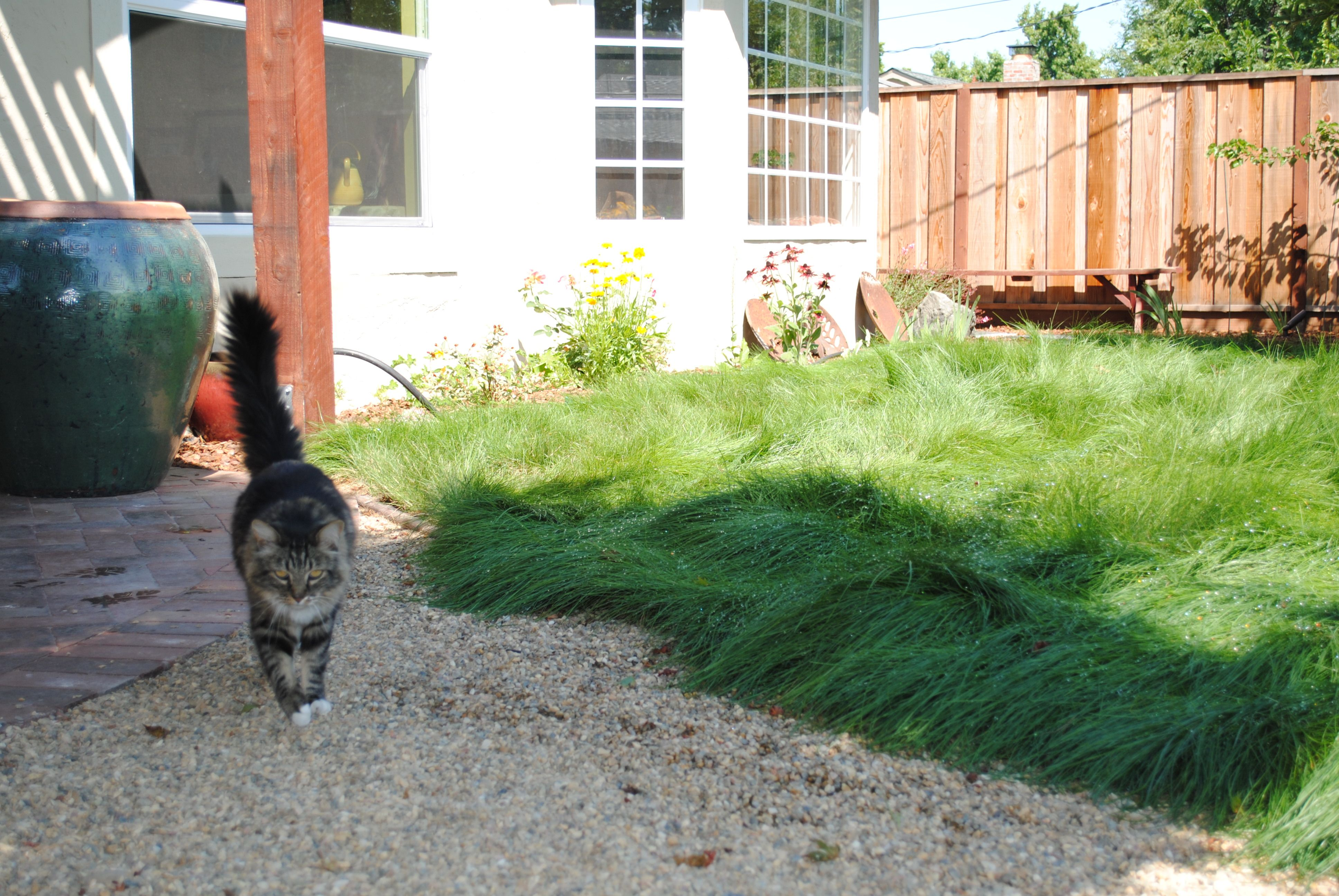 delta bluegrass native mow free google search landscaping