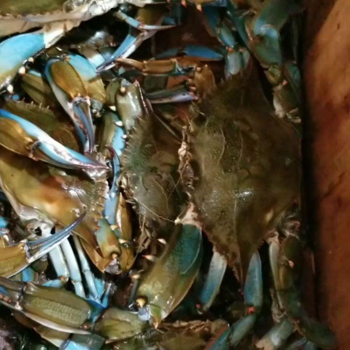 recipe: order live blue crabs online [15]