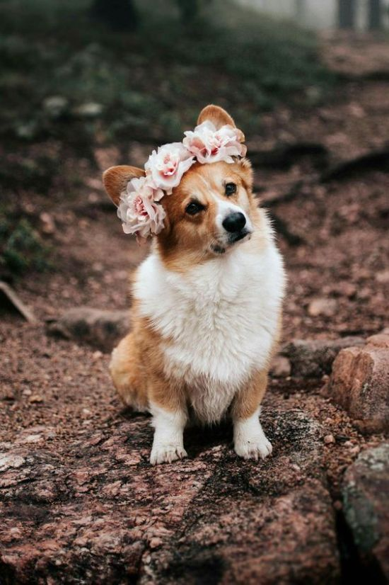 Photo of Your Dog Breed According To Your Zodiac Sign – Society19