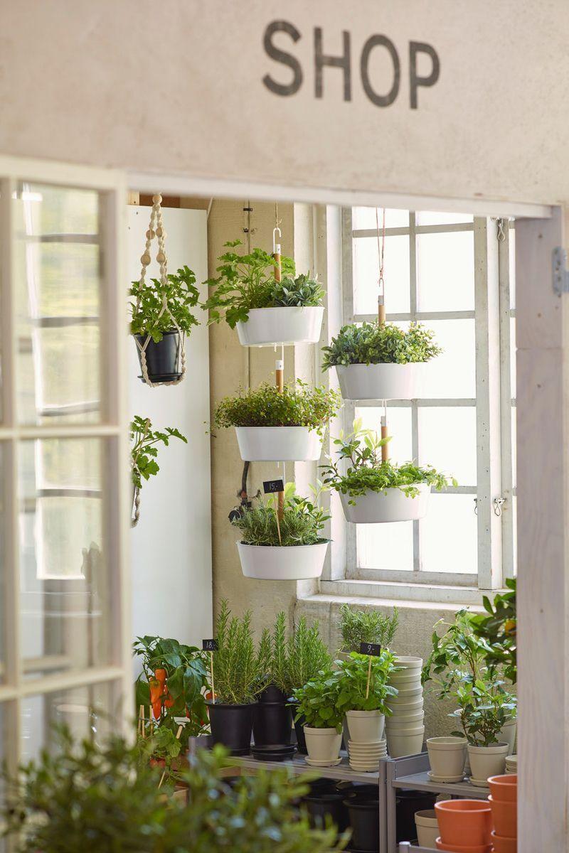 Praktische Kräuterampel für deine Wohnung  #hängendekräutergärten IKEA Deutschland | Zur Gestaltung eines hängenden Gartens kann man mehrere Ampeln miteinander verhaken. Mit Ampeln kann man seiner Kreativität freien Lauf lassen und dekorative 'hängende Gärten' gestalten. Und sie sparen Platz auf dem Fußboden. #urban #jungle #indoor #gardening #Pflanzendeko #Pflanzen #Deko #Blumendeko #Topf #Übertopf #Ampel #BITTERGURKA #vertical #garden #hängendekräutergärten Praktische Kräuteramp #senkrechtangelegtekräutergärten