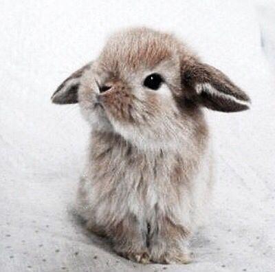 bunny bunny Животные Милые животные Кролик