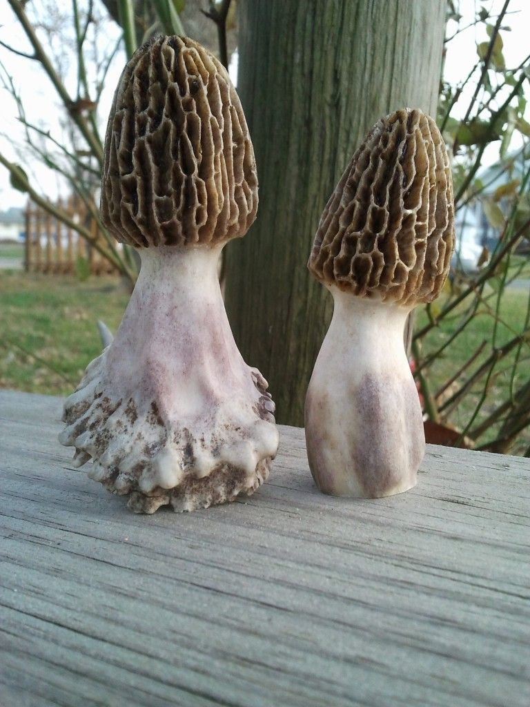 Amazing Set Of Morel Mushrooms Carved From Deer Antlers Random Download Free Architecture Designs Barepgrimeyleaguecom