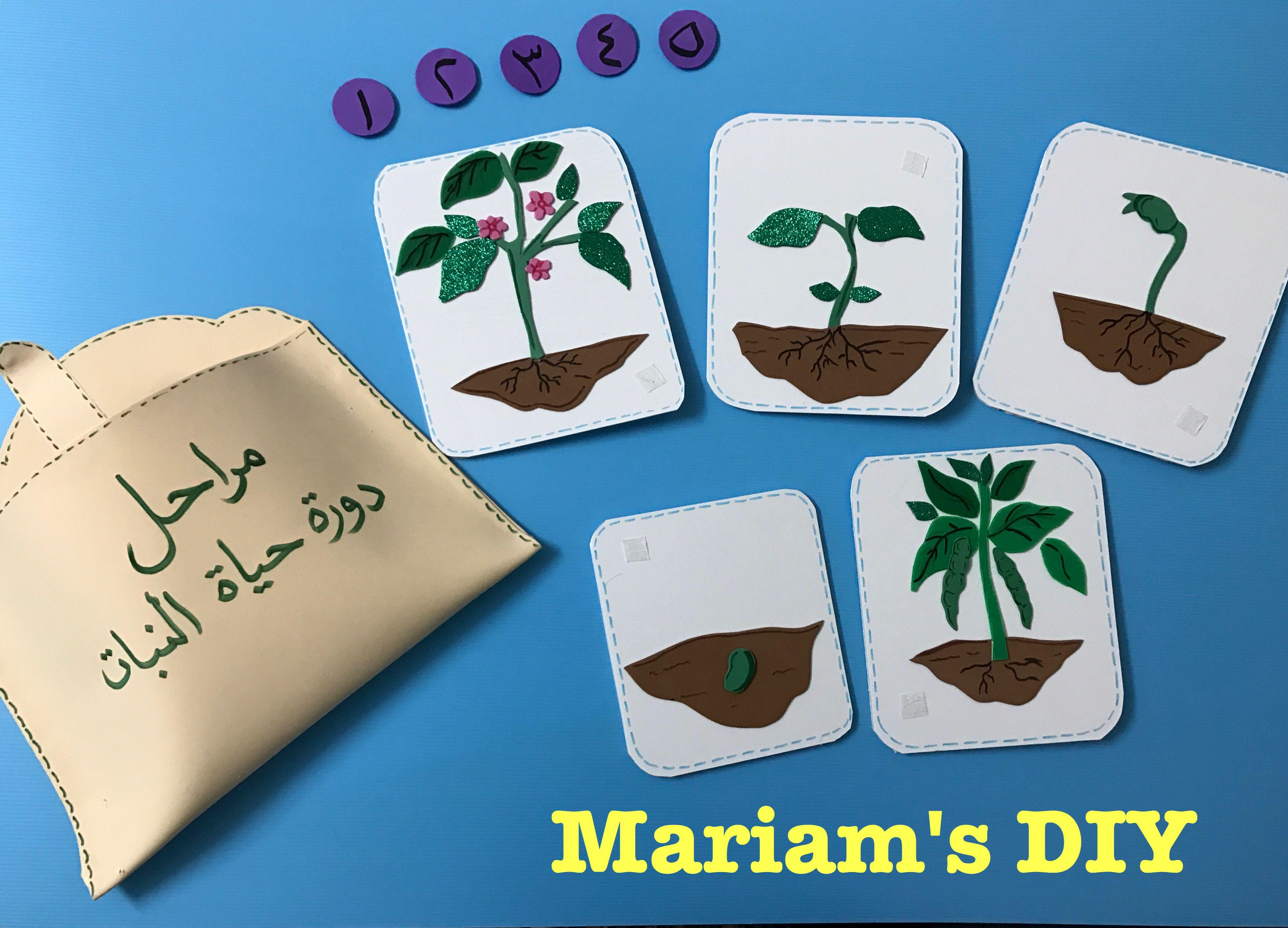 دورة حياة النبات School Crafts Learn Arabic Alphabet School