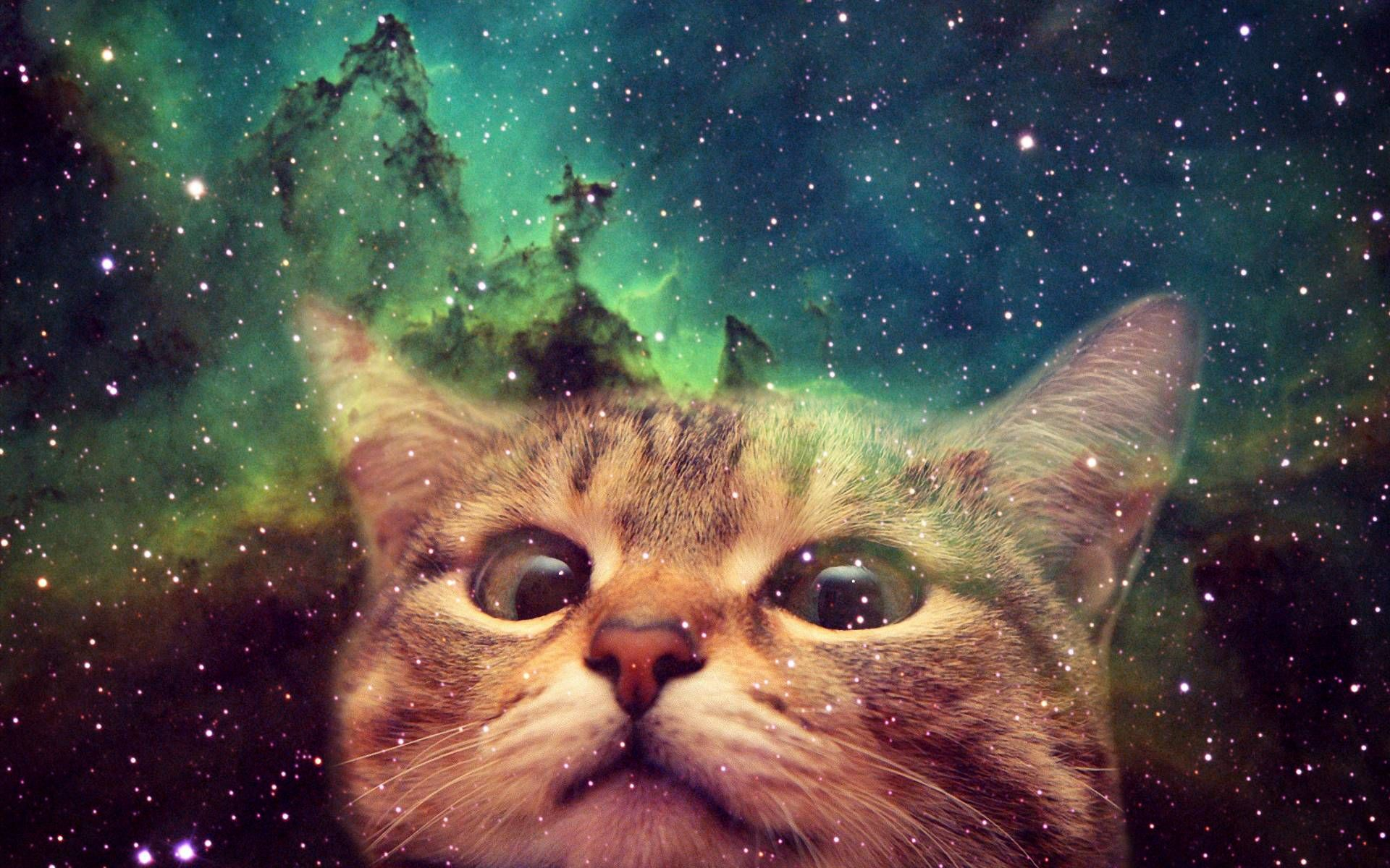 Hook Up Your Desktop With One Of These Awesome Cats In Space Wallpapers Caveman Circus Space Cat Cat Wallpaper Cat Wall Art