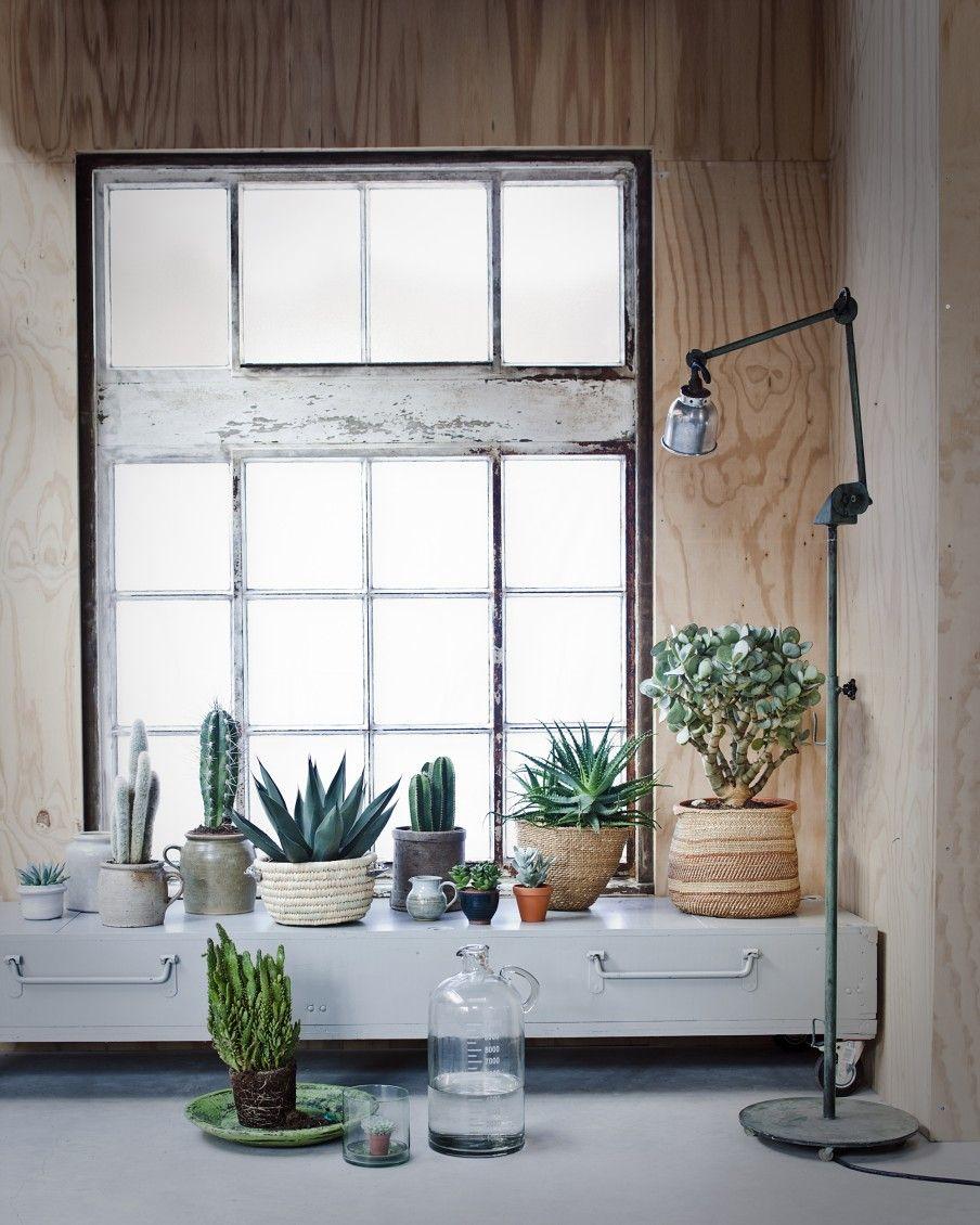 Styling Via Vtwonen Zimmerpflanzen Bilder, Pflegeleichte Zimmerpflanzen,  Bonsai Pflanzen, Haus Kunst, Fensterbank