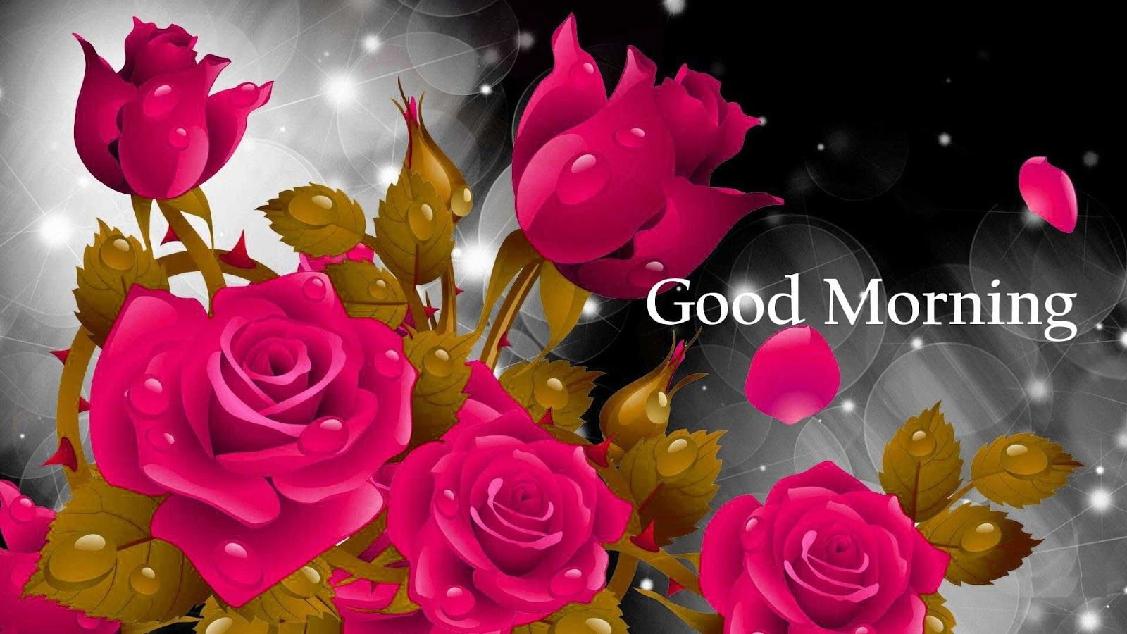 Good Morning Images with Rose Rose flower wallpaper, Red