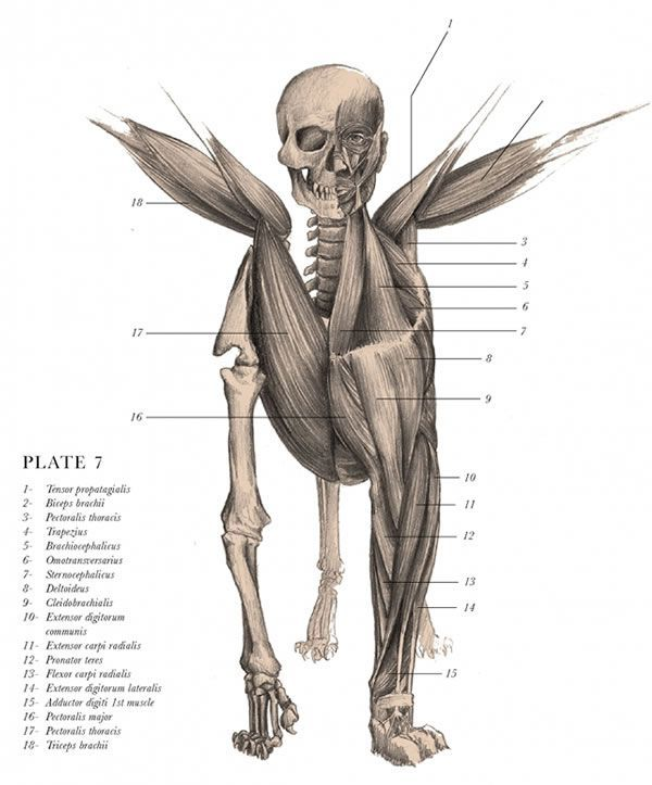 Mythical Creatures In Vintage Anatomically Correct Illustrations
