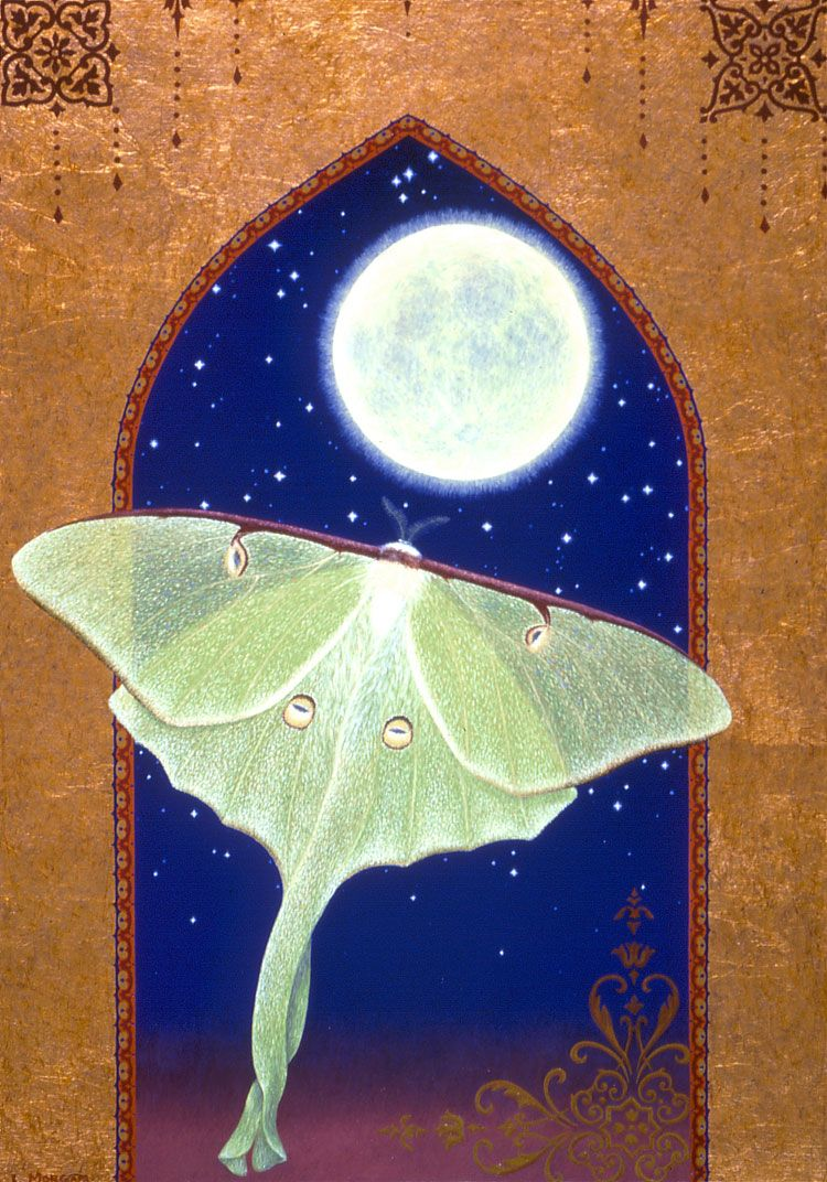 Moths spiritual meaning moths symbolize many things from a moths spiritual meaning moths symbolize many things from a message to transformation needed in your life it symbolizes faith hope and vulnerabil buycottarizona