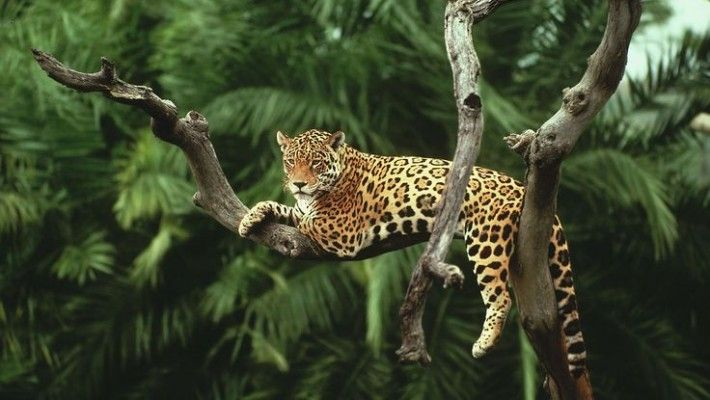 Costa Rica Approve Ban On Hunting Wildlife For Sport