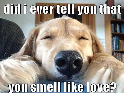 So Cute Dog Words Funny Animal Pictures Funny Dog Pictures