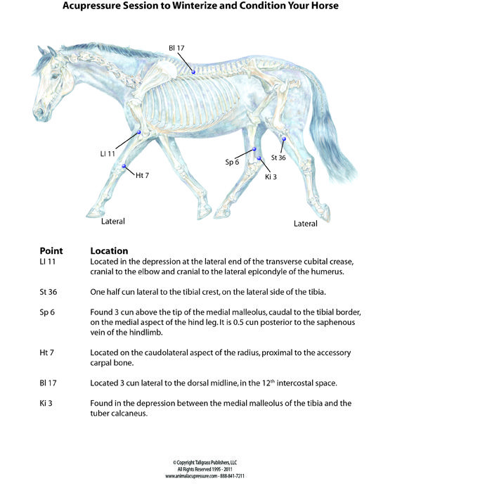 Winterize Your Horse With Acupressure Equine Health Wellness