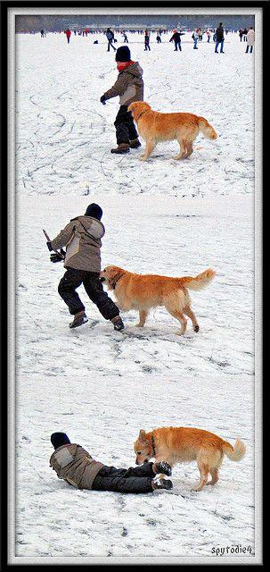 Kid Dog Dogs Funny Dogs Golden Retriever