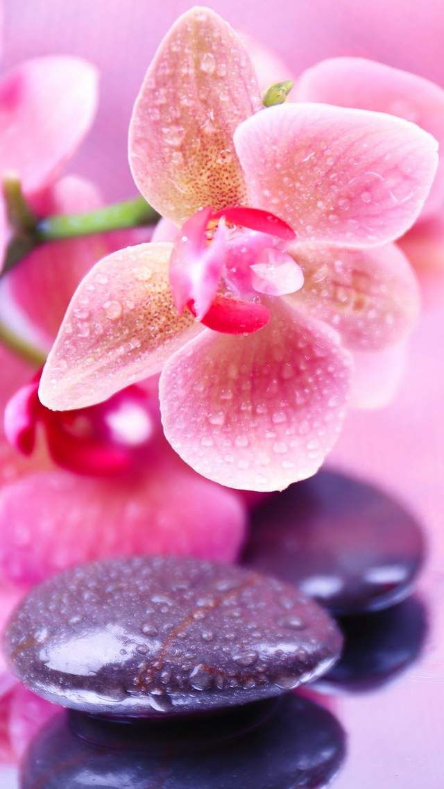 Orchid In 2019 Orchid Wallpaper Orchids Flower Wallpaper