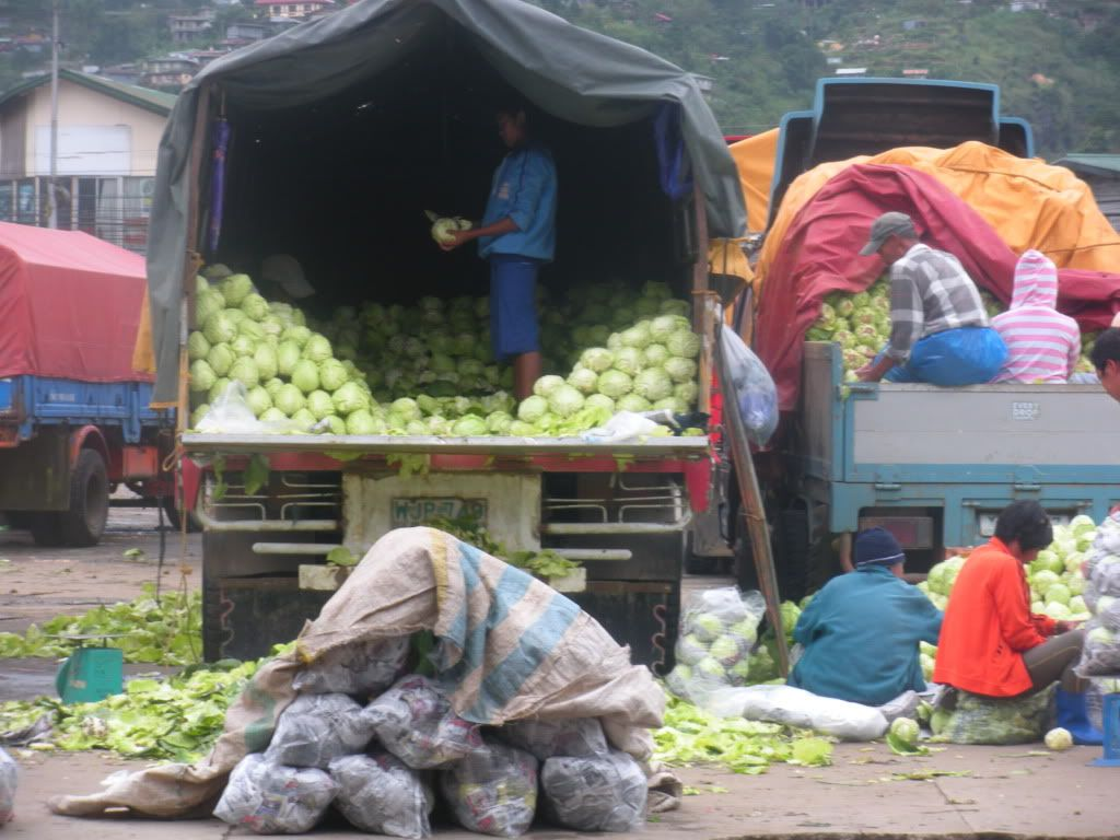 Local market trim the cabbage sprawled on the ground for its next hauling stage.