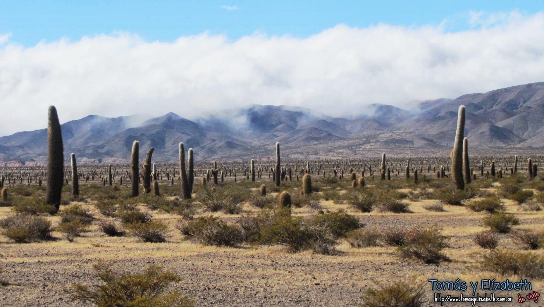 Parque Nacional Los Cardones, Provincia de Salta