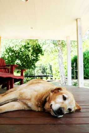 """How to beat the """"dog days"""" of summer - tips from pro #triathletes"""