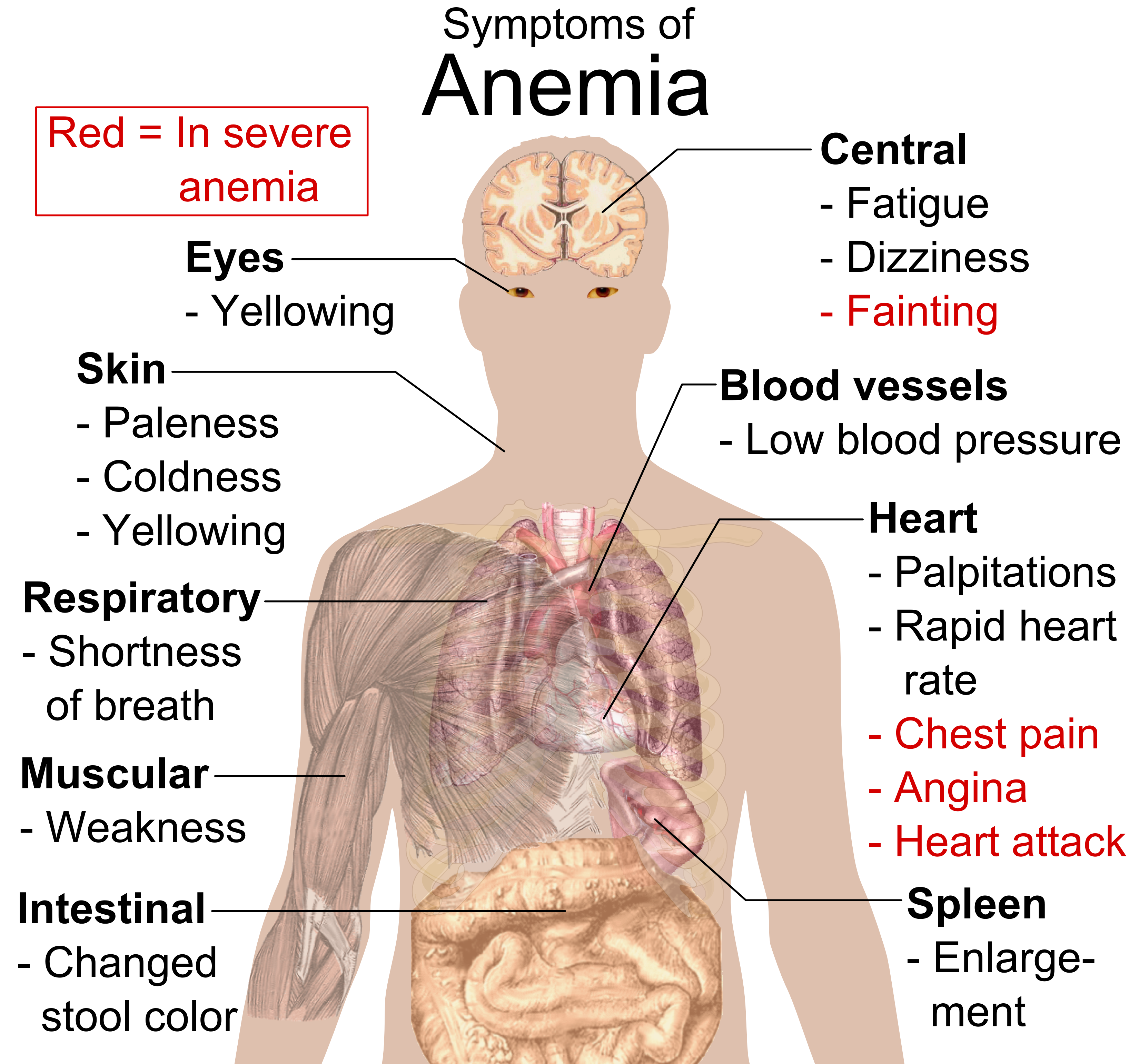 Signs of vitamin deficiency in the body