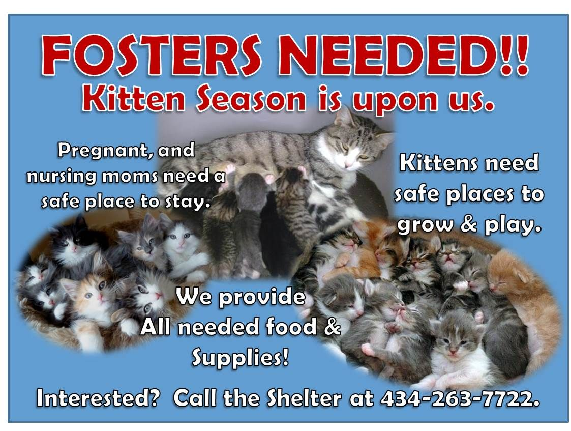 Fosters Needed Kittens Google Search Kitten Season The Fosters Kittens