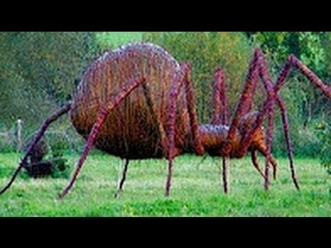 The Biggest Spiders In The World | Spiders scary, Large ...