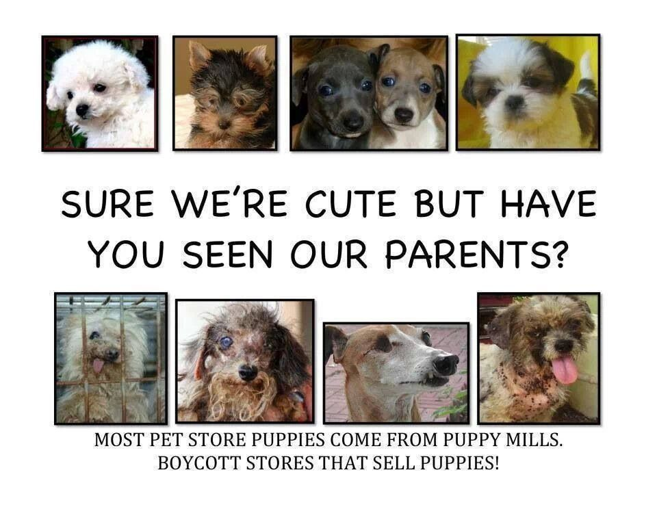 Adopt don't buy! Posters/slogans animal rights