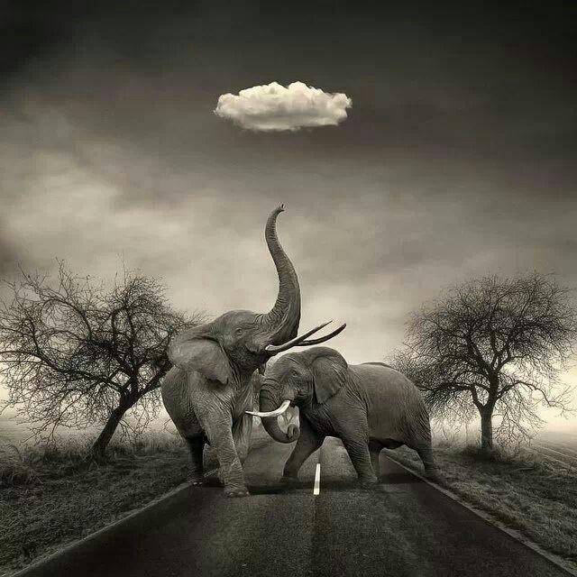 Elephants in the Road