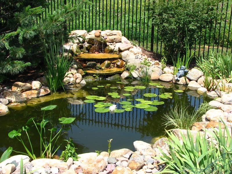 Turtle Ponds for Backyard | backyard turtle pond - Turtle Ponds For Backyard Backyard Turtle Pond Earthy Bliss