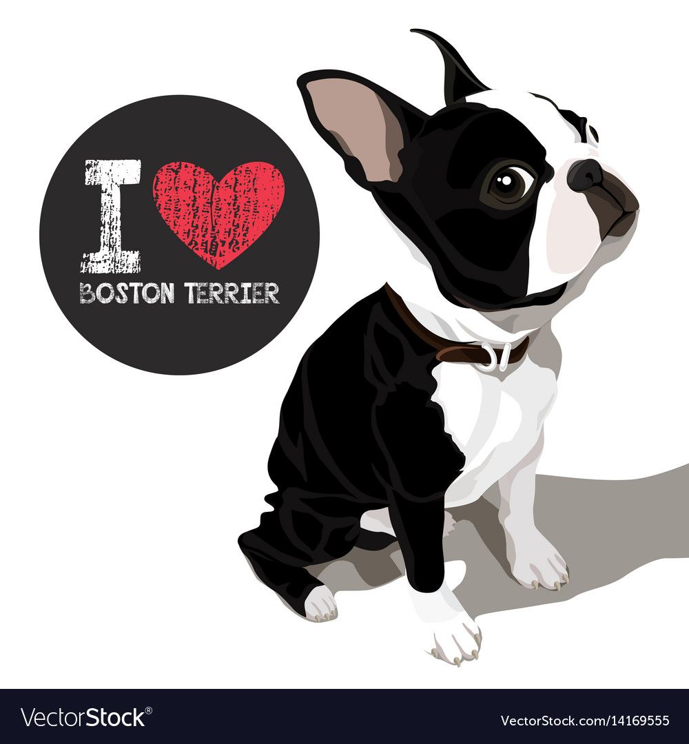 Download I love boston terrier Royalty Free Vector Image , #Ad, # ...