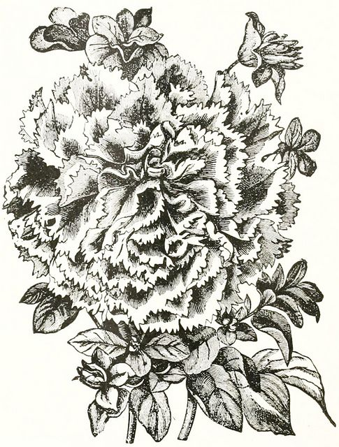 A Lovely Late Victorian Floral Illustration From 1897 Vintage Flowers Illustrations