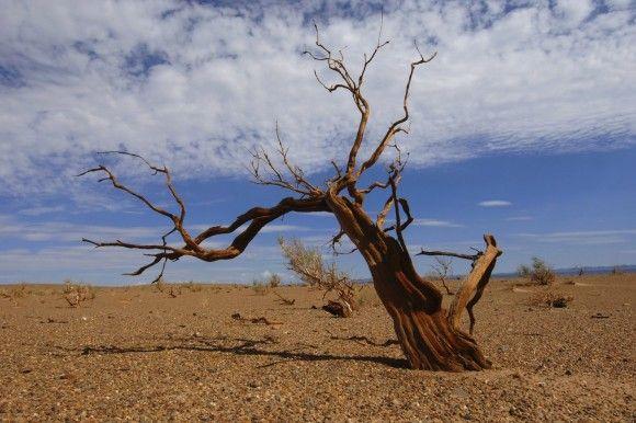 bäume australien - Google-Suche