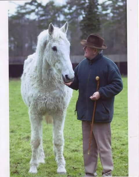 Desert Orchid And David Elsworth Horses Horse Racing Horse