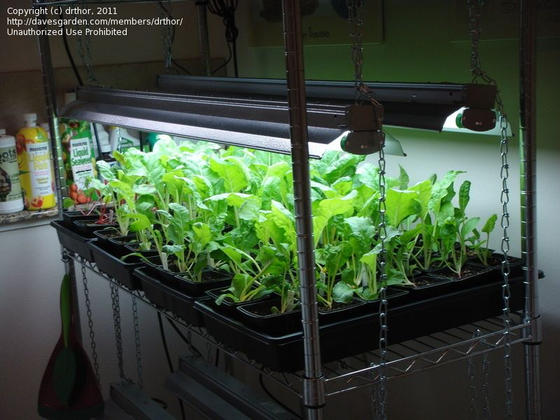 Indoor Winter Vegetable Garden indoor vegetable gardening
