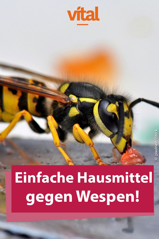 Hausmittel So Vertreiben Sie Wespen Wespenstich Wespe Hausmittel Gegen Wespen