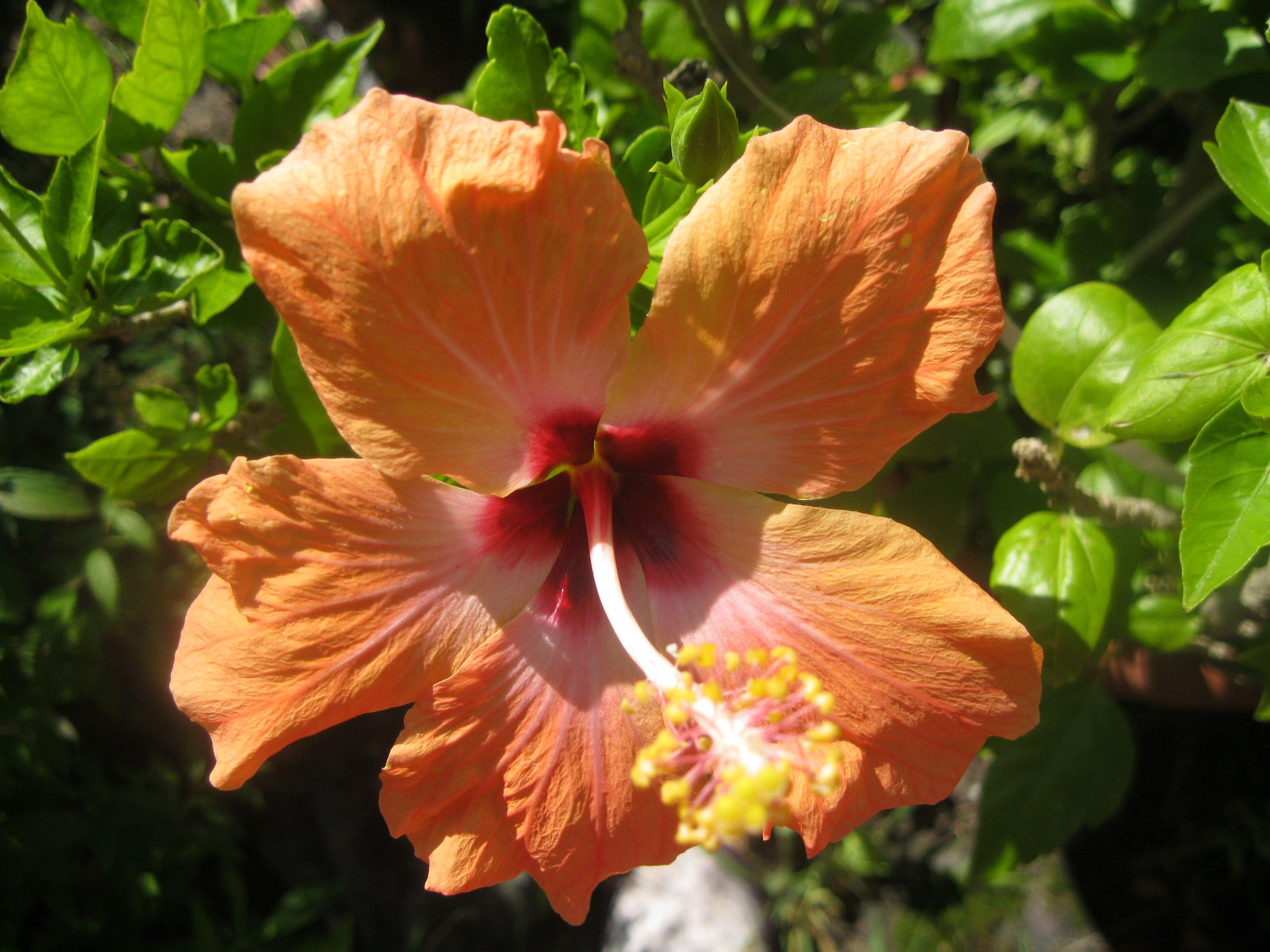 859a1ea26ca658b55dca6731988346bf Luxe De Fleurs De Jardin Des Idées