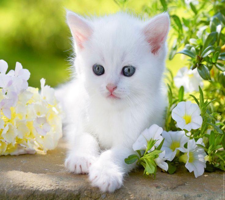 Фотографии красивых кошечек
