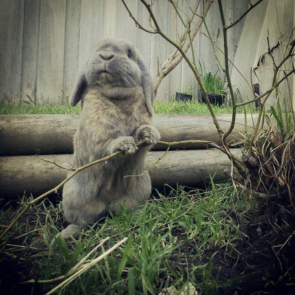 My friend's bunny rabbit loves to explore the garden