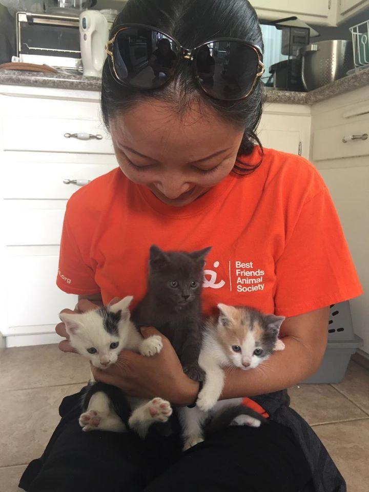 Park Art|My WordPress Blog_Animal Shelter Volunteer Jobs Near Me