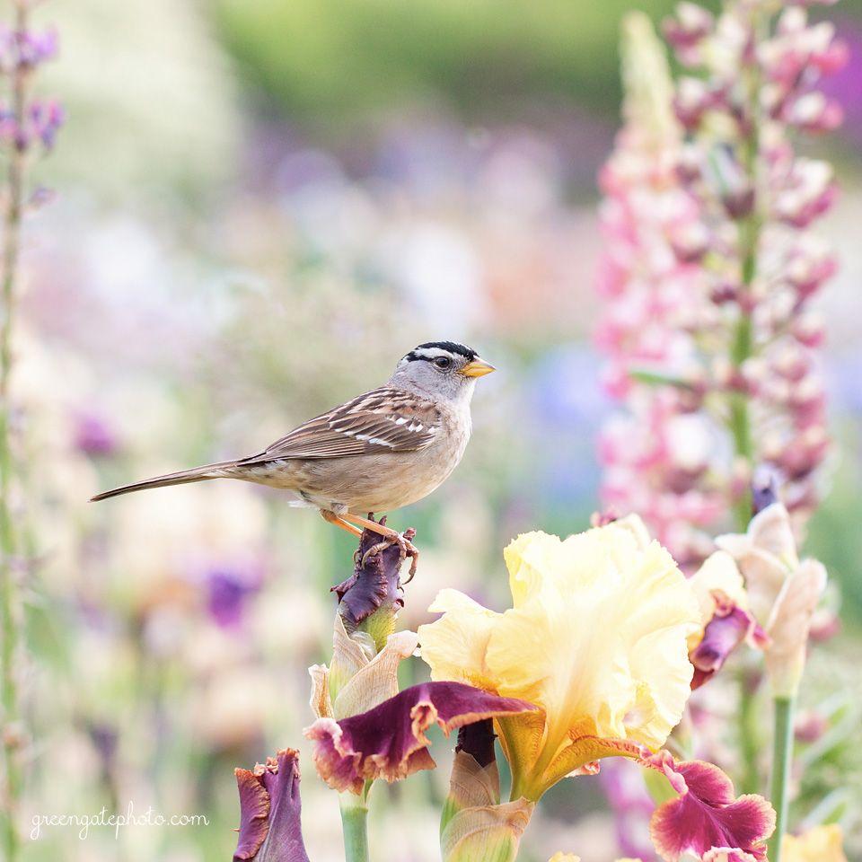Bird on an iris photo portrait photography