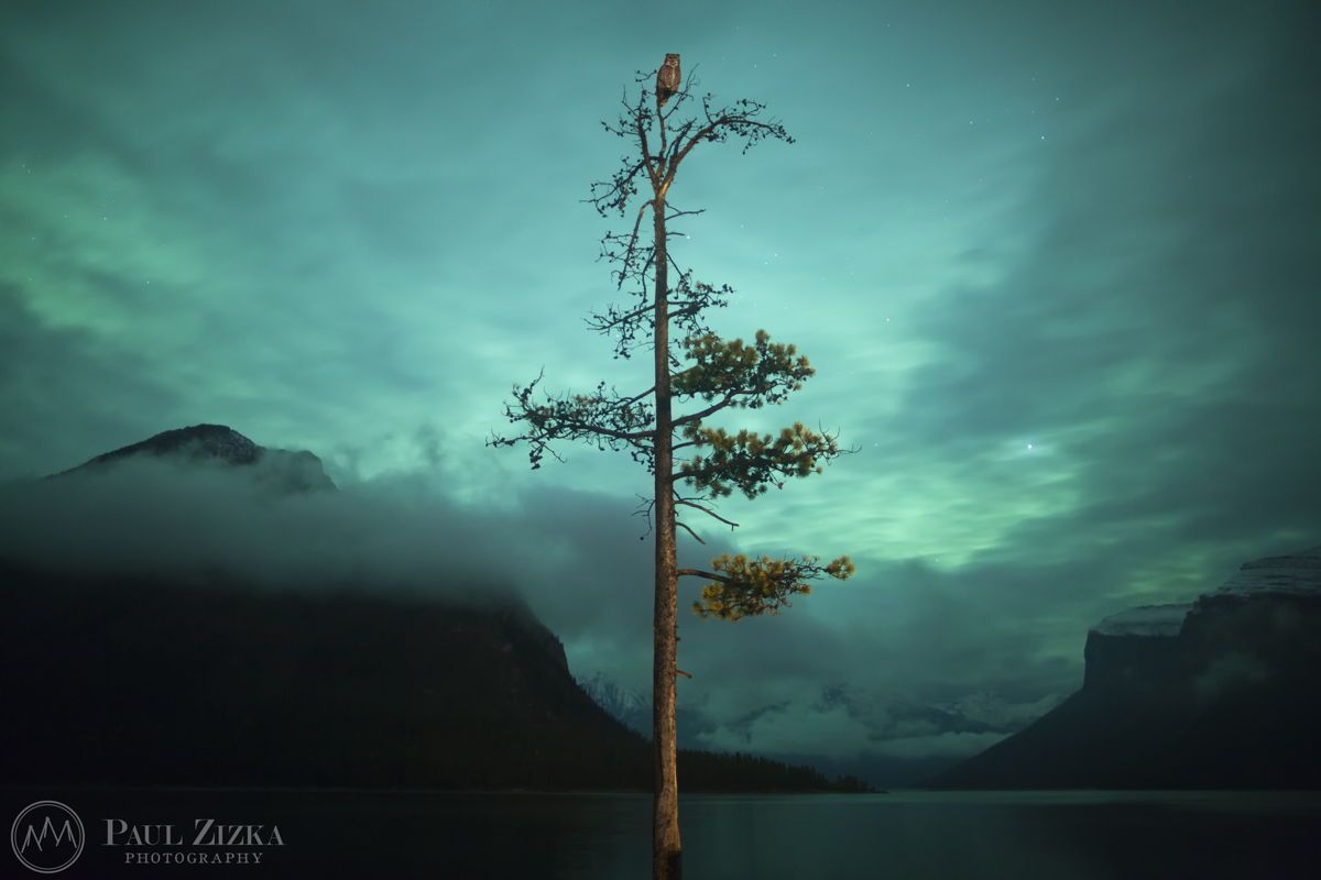 WOW! The Owl and the Tree - Astrophotographer Paul Zizka sent in this photo of an aurora with a special guest, taken at the Minnewanka boat docks, Banff National Park, Canada, on Oct. 8, 2012. via @Space.com (Official)