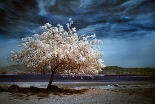 Tree Photography Inspiration 39 Beautiful Examples Tree Photography Beautiful Tree Landscape Photography