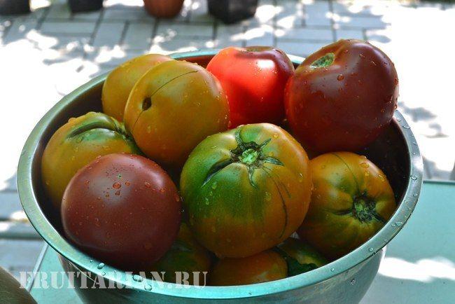 третьяковский сорт помидор отзывы