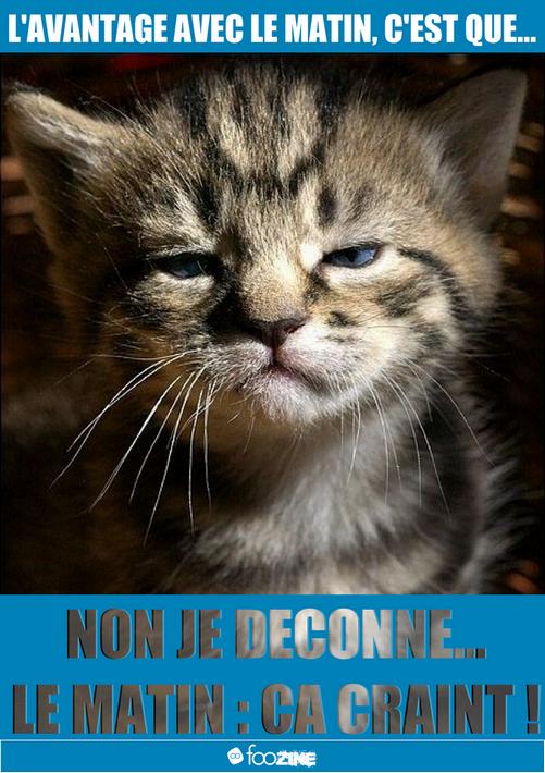 panneaux-humour | Chat marrant, Animaux amusants, Photo drole animaux