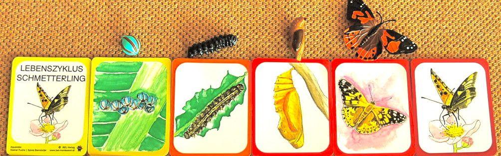Lebenszyklus Schmetterling Lernmaterial Shop Bel Montessori Schmetterling Lebenszyklus Lernen